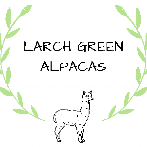 Larch Green Alpacas