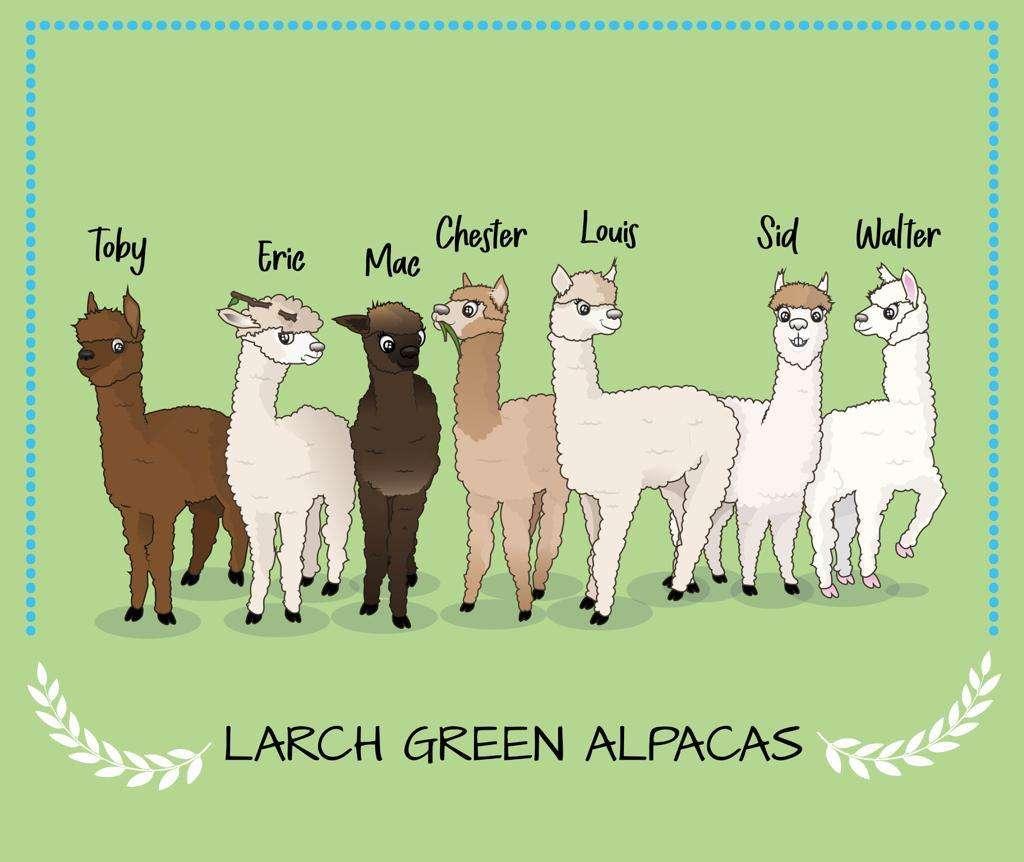 T-Shirt All Alpacas